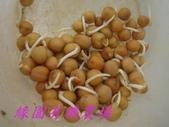 未分類相簿:971128 豌豆-2.jpg