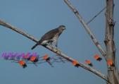 園區鳥類:102.12.04 018.jpg