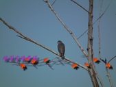 園區鳥類:102.12.04 034.jpg