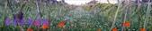農場作物:2014-12-15 16.33.050.jpg