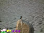 野生禽鳥:2015-02-19 05.11.390.jpg