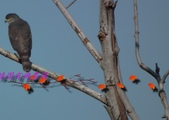 園區鳥類:102.12.04 035.jpg
