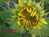 農場綠化:101.05.11 010.jpg