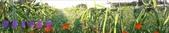農場作物:2014-12-16 15.59.130.jpg
