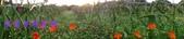 農場作物:2014-12-15 16.32.380.jpg