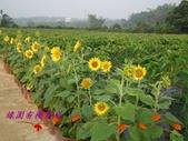 農場綠化:101.05.11 006.jpg