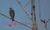 園區鳥類:102.12.04 022.jpg