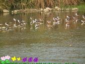 野生禽鳥:2015-02-19 04.49.380.jpg