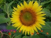 農場綠化:101.05.11 011.jpg
