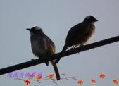 園區鳥類:103.01.15 021.jpg