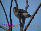 園區鳥類:103.01.07 022.jpg