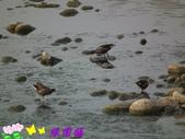 野生禽鳥:2015-02-19 04.25.090.jpg