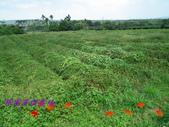 農場作物:103.09.18-011.JPG
