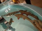 2011大阪自由行雜記:大阪天保山海遊館 (56).JPG