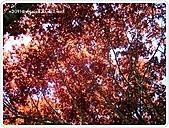99-07-03-宜蘭太平山之旅:SANY0045.jpg