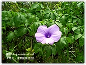98-09-1213-南庄二日遊:SANY0356.JPG
