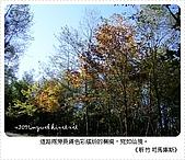 97-12-2021-司馬庫斯:SANY0014.JPG