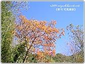 97-12-2021-司馬庫斯:SANY0015.JPG