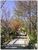97-12-2021-司馬庫斯:SANY0025.jpg