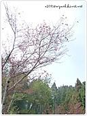 100-03-12-苗栗_雪見‧泰安山路行:P1000445.JPG