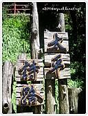 99-07-03-宜蘭太平山之旅:SANY0052.jpg