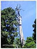 99-07-03-宜蘭太平山之旅:SANY0053.jpg