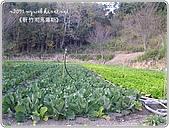 97-12-2021-司馬庫斯:SANY0070.JPG