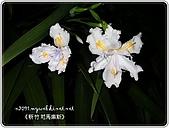 97-12-2021-司馬庫斯:SANY0075.JPG
