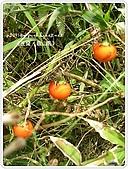 98-08-2931-前進龜山島 vs 東西冷泉大評筆:SANY0194.jpg