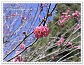 99-12-1113-武陵合歡山三日遊:DSC00182.JPG