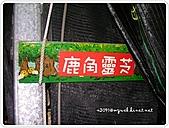 99-08-0102-南投日九纜車:SANY0145.jpg