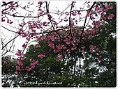 100-03-01-三芝_櫻花雨:P1000379.JPG