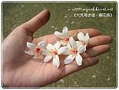 98-05-02-大艽芎古道‧桐花祭:SANY0265.JPG