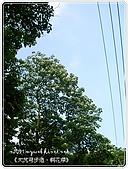 98-05-02-大艽芎古道‧桐花祭:SANY0266.jpg