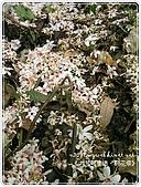 98-05-02-大艽芎古道‧桐花祭:SANY0269.jpg