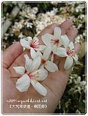98-05-02-大艽芎古道‧桐花祭:SANY0270.jpg