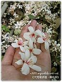 98-05-02-大艽芎古道‧桐花祭:SANY0271.jpg