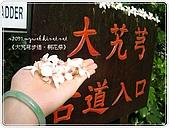98-05-02-大艽芎古道‧桐花祭:SANY0273.JPG