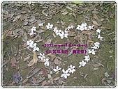 98-05-02-大艽芎古道‧桐花祭:SANY0284.JPG
