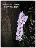 98-05-02-大艽芎古道‧桐花祭:SANY0292.jpg