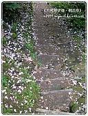 98-05-02-大艽芎古道‧桐花祭:SANY0293.jpg