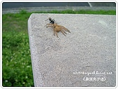 98-07-04-鼻頭角步道&貝殼廟:SANY0077.JPG