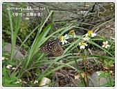 98-08-2931-前進龜山島 vs 東西冷泉大評筆:SANY0296.jpg