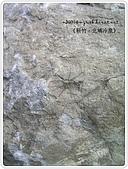 98-08-2931-前進龜山島 vs 東西冷泉大評筆:SANY0303.jpg