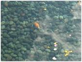 101-04-25-峇里島蜜月自助旅行(6):P1030766.JPG