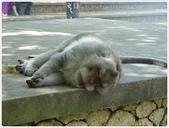 101-04-27-峇里島蜜月自助旅行(8):P1040460.JPG
