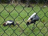 S.F Zoo:DSC03648