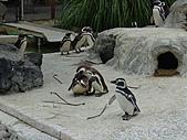 S.F Zoo:DSC03659
