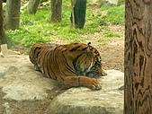 S.F Zoo:IMGP1203