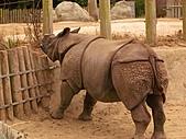 S.F Zoo:IMGP1214
